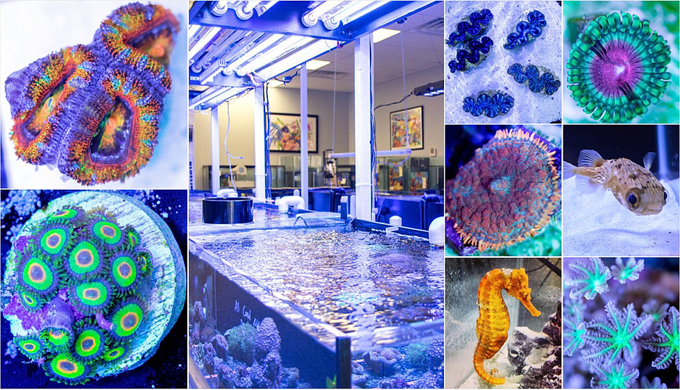 Coral haven saltwater fish store live corals for Saltwater fish store