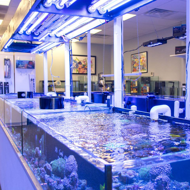 Fish stores in iowa coral haven saltwater fish corals for Salt water fish store