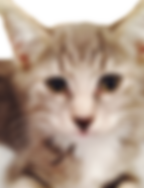cat_animalcontrol.png