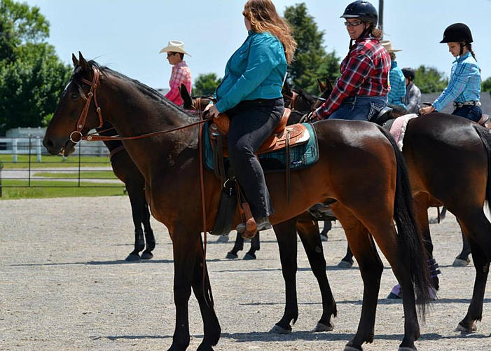 Hey Mister DJ Standardbred gelding for adoption through Go And Play Stables