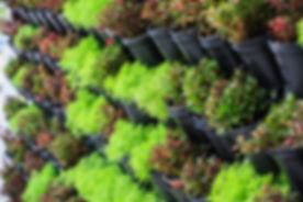 Pflanzenladen