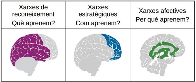 Les tres xarxes neuronals en les quals es basa del DUA