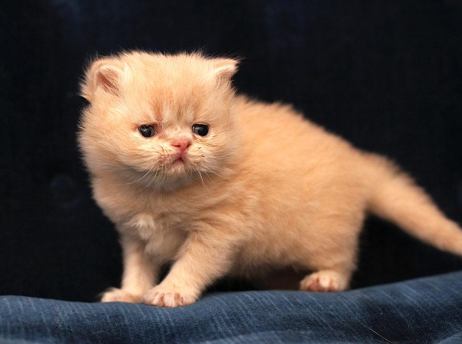 cat heart murmur treatment