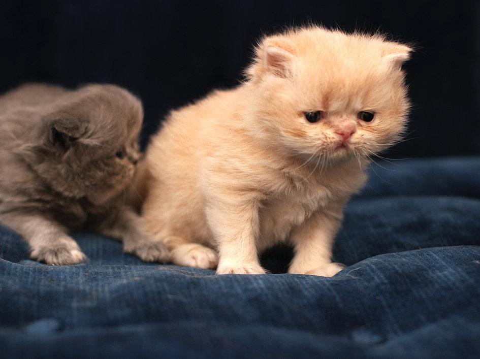 warrior cats kits