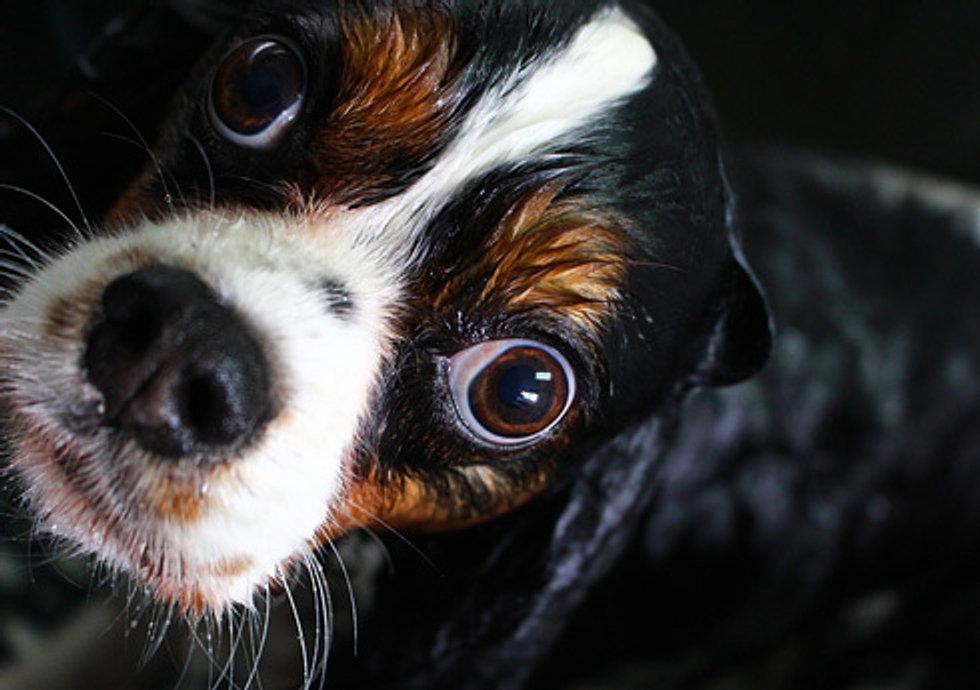 Best Dog Groomer In Sf