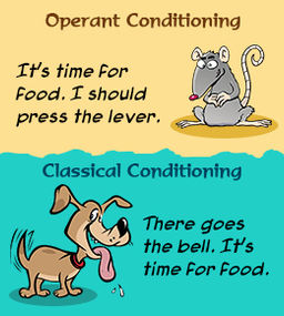 classical vs operant conditioning Classical and operant conditioning share many of the same basic principles and procedures for example, kimble (1961) has pointed out that the basic principles of.