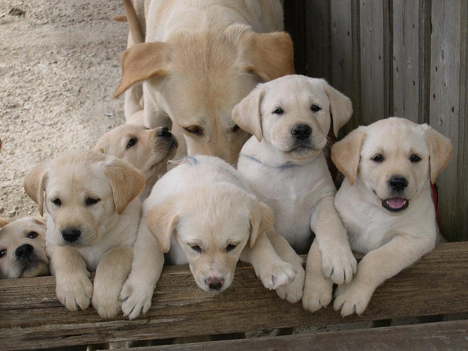 Cuccioli di Tea.JPG