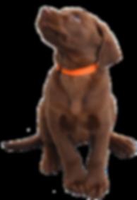 St Simons dog trainer
