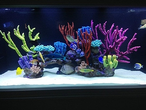 Custom aquarium reef insert for Artificial coral reef aquarium decoration uk