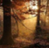 kpni interventies, bos, le bois, l nture, de natuur