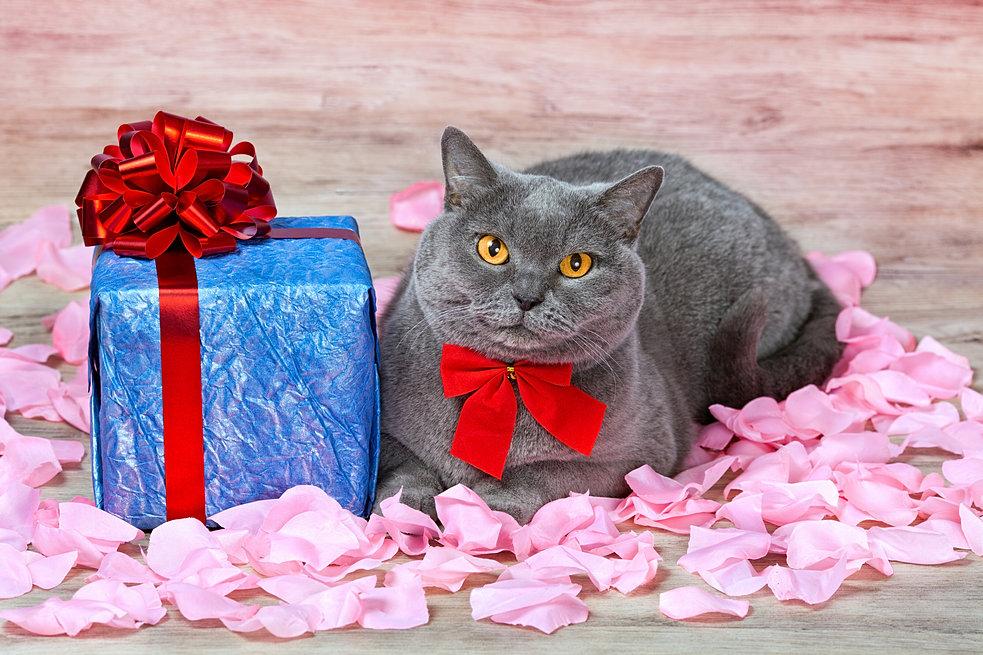 Открытка с котом в подарок
