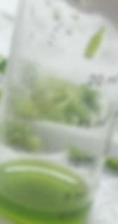 """""""drones + agricultura + chile + uva de mesa"""""""