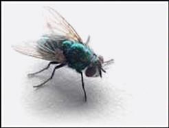 fly-control-pest-kill-remove-subang-jaya