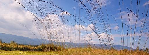 naturschutzgebietbannriet.jpg