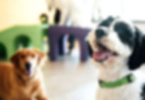 Doggy daycare gold coast