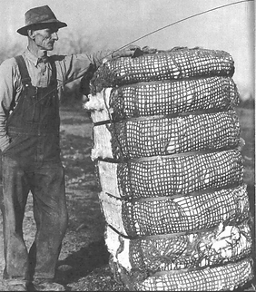 CME Cotton Farmer with baies .png