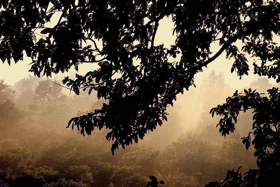 Jim Corbett National Park– Death of a Barking Deer