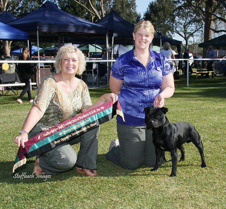 Opp Inter In Show - NNSW Sep 2010