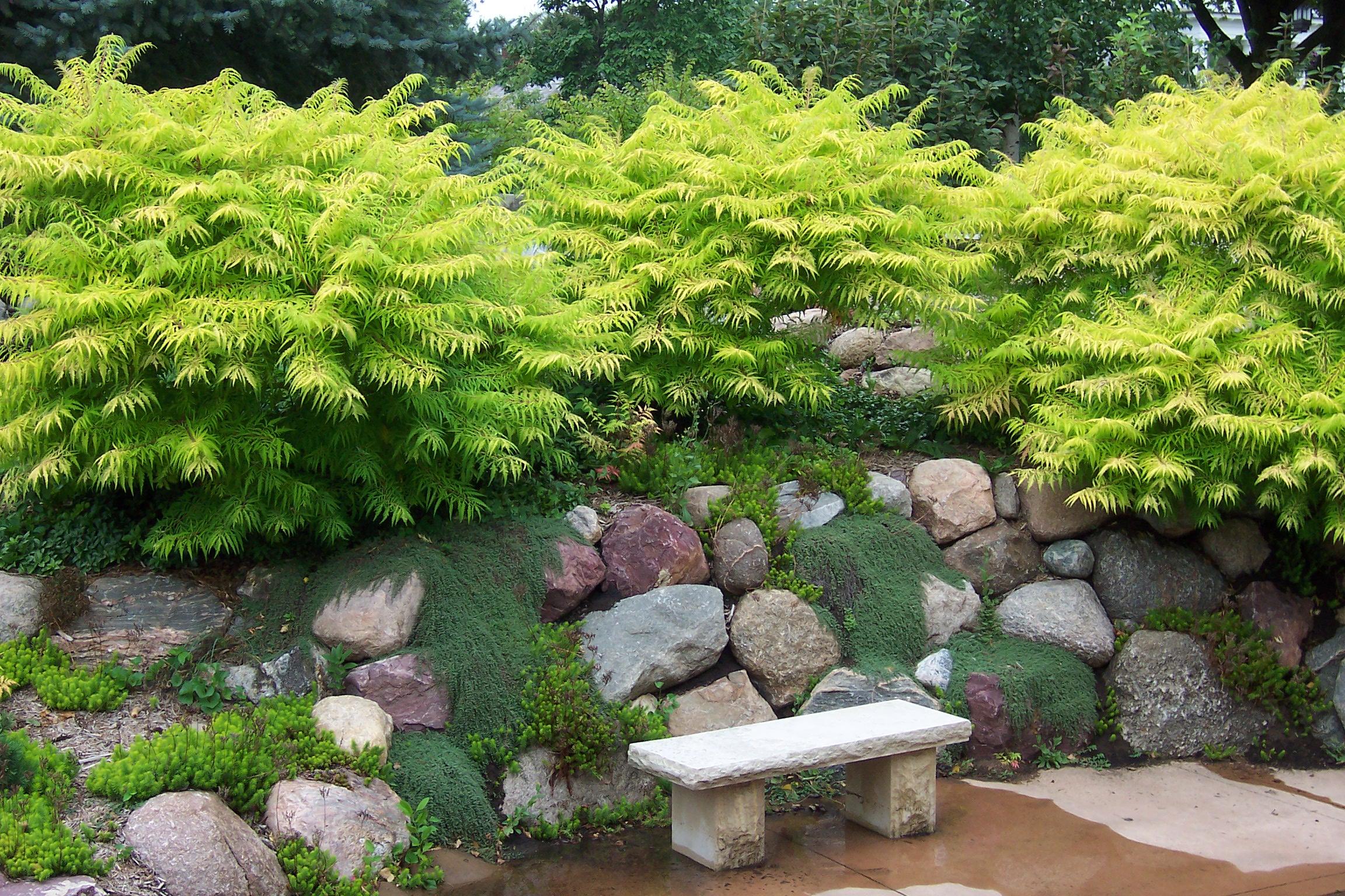 Image Result For Small Garden Landscape