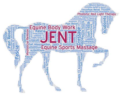 equine performance and wellbeing