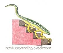 Newt Descending a Staircase