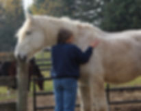 horses allow for self discovery