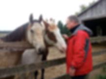 Horses teach communication skills