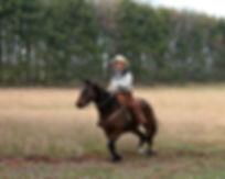 horses are authentic