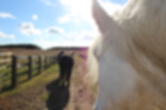 Horses are honest and open teachers