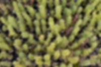 One Tree Planted-58.jpg