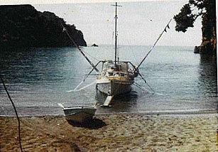 Abalone  South East Bay Mayor Island