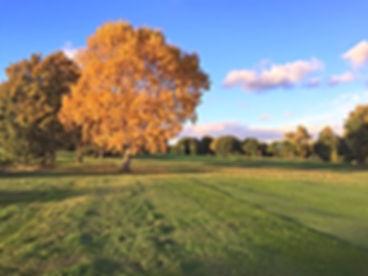 Autumn on the 16th_edited.jpg