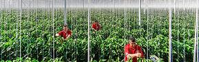Tuinbouwbedrijf Wijnen BV.jpg