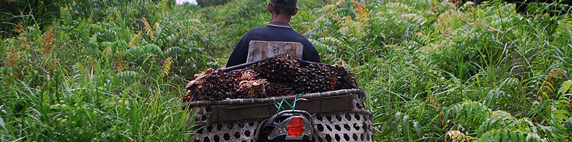 slavery in the chocolate industry 4 essay A coalition to bring an end to child slavery and the worst forms of child labor in the cocoa industry help us eradicate child slavery in the cocoa industry home ethical slave free chocolate home.
