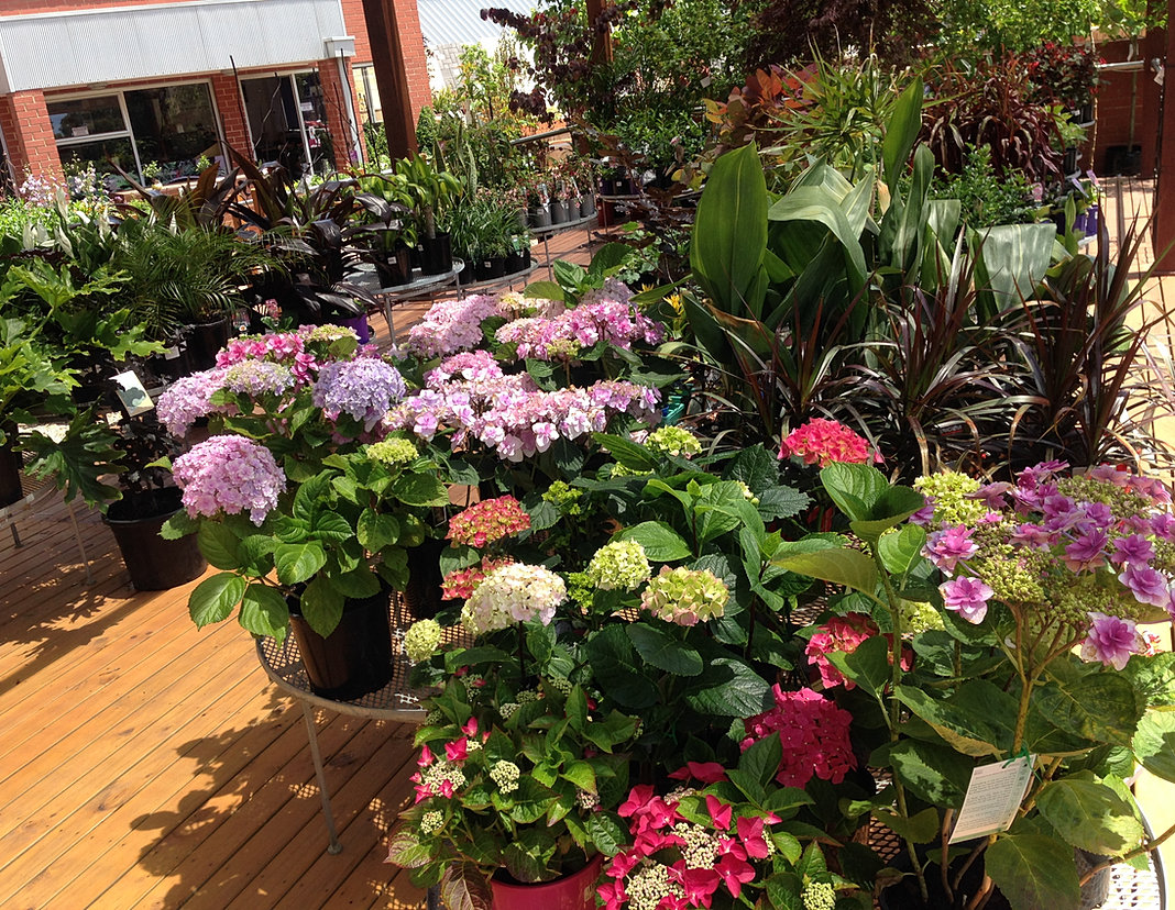 The garden depot landscape professionals for Garden trees adelaide