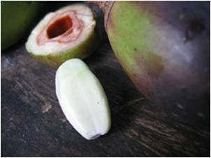 Pili fruit