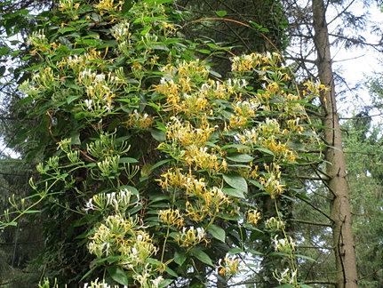 Lianes du jardin jungle jardin botanique de normandie for Boulevard du jardin botanique 20 22