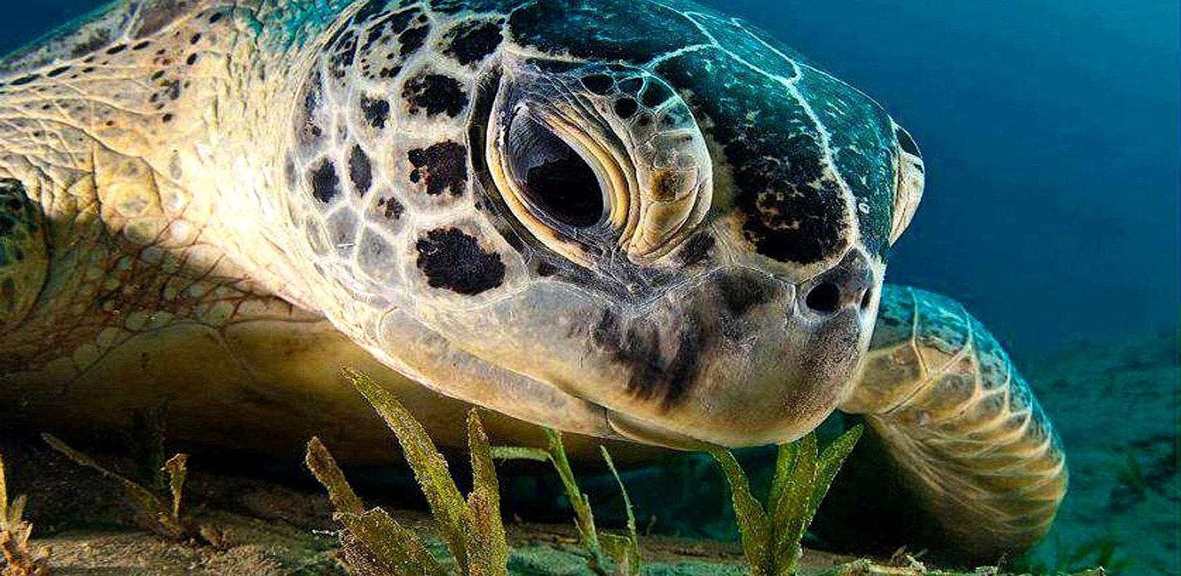 Caretta Walk - International Turtle Walk