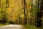Woodland drive.jpg