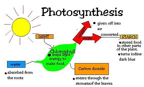 photosynthesis notes Lesson 411: life science – photosynthesis & respiration video unit 411 – what is photosynthesis (4:00 min) video note sheet unit 411 handout 1.