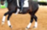 Loomis horse boarding