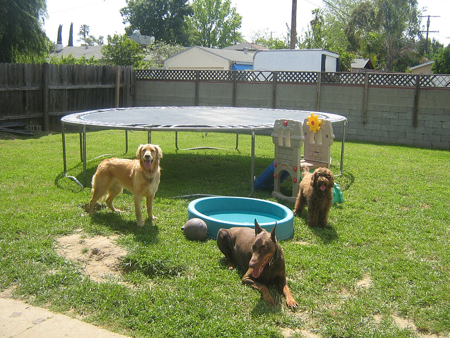 Best dog daycare los angeles dog boarding and training in for Dog boarding los angeles