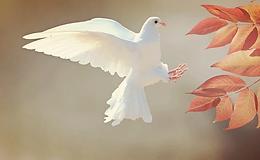 4edlrlfg_peace-day-650_625x300_21_September_20.webp