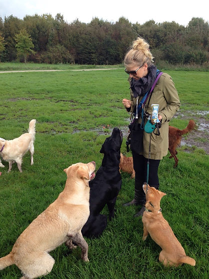 dog walker honden uitlater hondenuitlater hondenverzorger opvanger hond dogsitter petsitter caretaker dogwalker