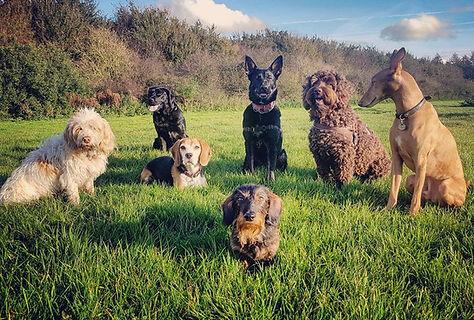doggies packwalk group dogwalker walks dogsitter doggy daycare dog creche hondenopvang dagopvang uitlaten
