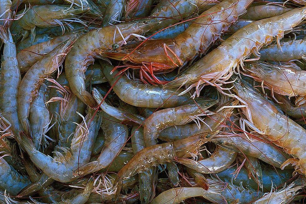 The fish depot florida seafood market florida for Florida fish market