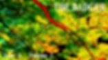 MAPLE LEAVES 2 poster.png