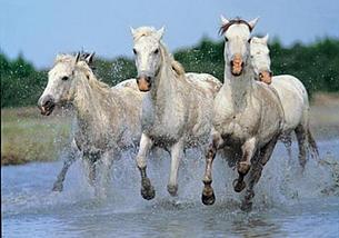 ligne en crin de cheval Aa122d_ac8620de96f947a0b979fa96b9fd0a63.jpg_srz_p_305_214_75_22_0.50_1.20_0