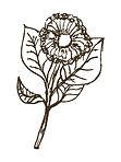 lea&lens flower.jpg