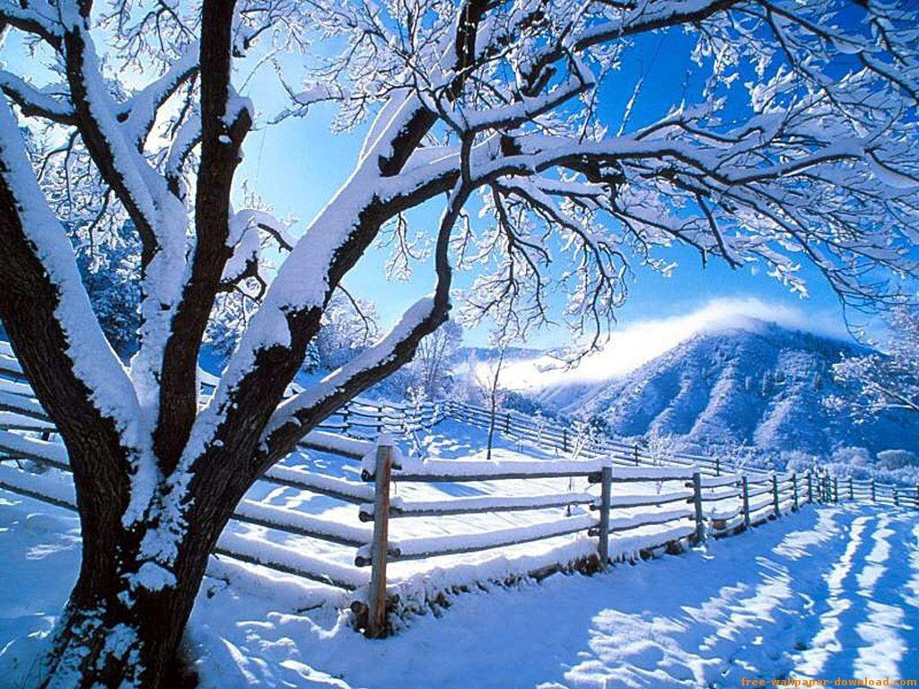 Resultat d'imatges de hivern